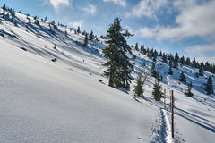 Buried in snow forest and dry trees Stock Images