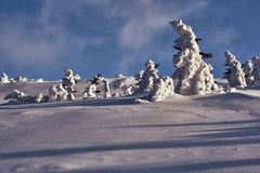 Buried in snow forest in the Giant Mountains Stock Image