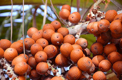 Buriti Stock Photo