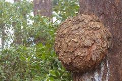 Burl del árbol Imagenes de archivo