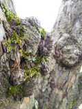 Burl with moss Stock Photography