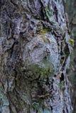 Burl na drzewnym bagażniku zdjęcie stock