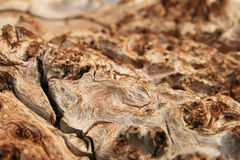 Burl wood grain Royalty Free Stock Image
