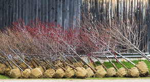 Burlap-η αναμονή δέντρων Στοκ Εικόνα