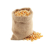 Burlap bag with corn grain. On white background Stock Photo