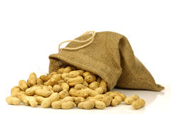 Burlap bag with roasted peanuts Stock Images