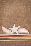 Burlap linen with wooden sticks and seashells Royalty Free Stock Photo