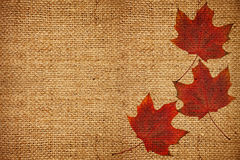 Burlap with maple leaves Royalty Free Stock Photos