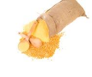 Burlap sack full of cornmeal. Stock Photography
