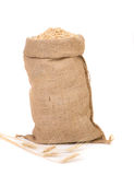 Burlap sack full of oat seed grain. Stock Photos