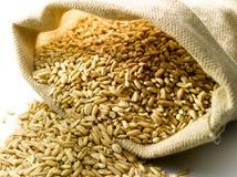 Burlap sack of wheat Stock Photo