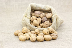 Burlap sack with whole walnuts Stock Photography