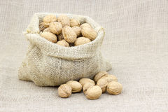 Burlap sack with whole walnuts Stock Image