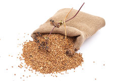 Burlap Sack With Buckwheat Stock Photo