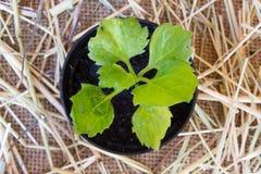 Burlap tło z rośliną Zdjęcia Royalty Free