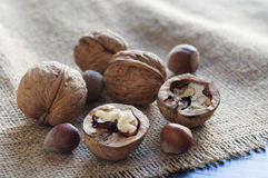 Burlap on a table of black wood. On burlap several walnuts and hazelnuts. Royalty Free Stock Images