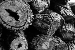 Burly Stack of Logs Royalty Free Stock Images