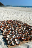 Burma. Coconut Shells Drying Royalty Free Stock Photo