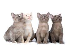 burma cztery figlarki Zdjęcie Royalty Free