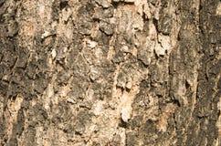 Burma padauk bark texture Stock Photos