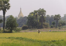 Burma rural scene Royalty Free Stock Photography