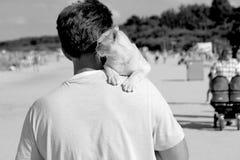 Burmakatt i härlig strand Royaltyfri Foto