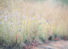 Burmania Coelestris D Foco vintageselective de la flor de Don Imagen de archivo libre de regalías