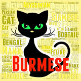 Burmese Cat Means Breeder Breed And Domestic. Burmese Cat Indicating Felines Offspring And Pedigreed Stock Photo