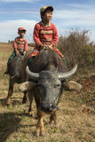 Burmese Children - Water Buffalo - Myanmar (Burma). Burmese children on water buffalo in the countryside near Kalaw in Myanmar (Burma Royalty Free Stock Photography