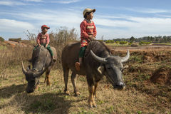 Burmese Children - Water Buffalo - Myanmar (Burma) Stock Images