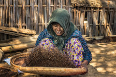 Burmese farmer woman threshes corn Royalty Free Stock Photography