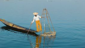 Burmese fisherman shows fish in the traditional trap. Inle lake, Myanmar stock footage