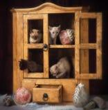 Burmese kattungar Royaltyfria Bilder