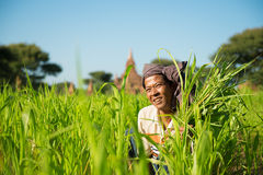 Burmese male farmer Stock Photos