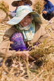 Burmese migrant workers harvesting onions in the fields Stock Image