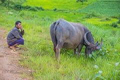 Burmese shepherd in Myanmar. SHAN STATE , MYANMAR - SEP 06: Burmese shepherd in a pasture with a buffalo in Shan state Myanmar on September 06 2017 , agriculture Stock Photo
