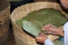 Burmese woman is choosing the tobacco leaves Myanmar Royalty Free Stock Photos