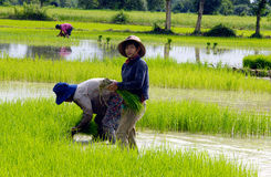 Burmese women. Work in the field in Kalaw, Burma (Myanmar stock images