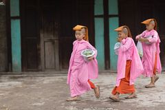 Burmese young nuns Royalty Free Stock Photos