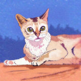 Burmilla猫例证 免版税图库摄影