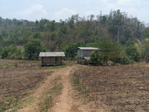 Burn down corn field. After harvest thai farmer burn down the fields. shows a typical thai hut in the background Stock Photo