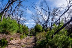 Burn down forest, La Gomera. Burn down forest with young bush growing, La Gomera, Canary islands royalty free stock photos