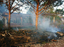 Burn dry grass, forest fire Stock Photography