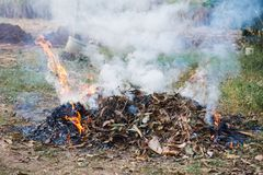 Free Burn Fire Dry Leaf Stock Images - 134989324