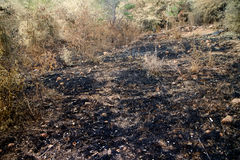 Burn with fire ground in wild. Dry plants on a black ground royalty free stock photos