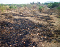 Burn with fire ground in wild. Scorched dry plains with bushes stock images