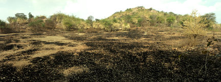 Burn with fire ground in wild. Scorched dry plains with bushes stock image