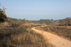 Burn grassland Royalty Free Stock Image