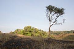 Burn grassland Stock Images