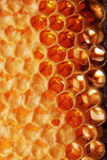Burn honeycomb Royalty Free Stock Photo